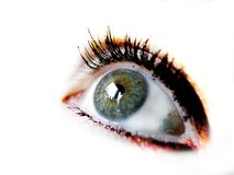 The eye. Eye staring, white background royalty free stock photo