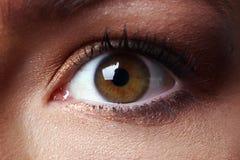 Eye. Brown eye closeup, woman eye stock photography