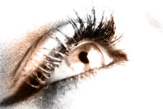 The eye Royalty Free Stock Images