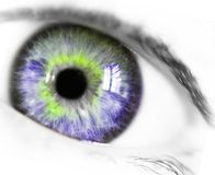The eye. Photo of a woman eye Stock Photos