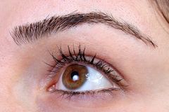 Eye. Sharp eye Royalty Free Stock Images