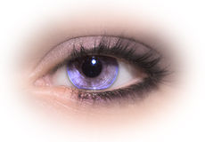 Eye. Macro shot of beautiful woman eye royalty free stock photos