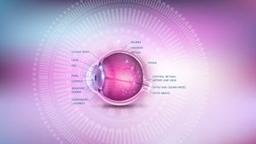 Eye anatomy stock video footage