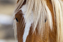 Eye And Mane Of Wild Horse In Wyoming Desert Stock Photos