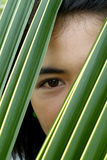Eye of Asian beauty. Seen through a palm  leaf Stock Photography