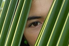 Eye of Asian beauty. Looking through a palm leaf Stock Photos