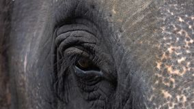 Eye of Asian elephant elephas maximus. Close up view