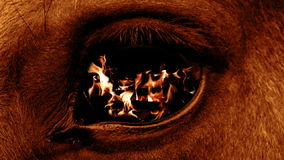 Eye beast stock video