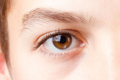 Eye with beautiful long lashes, brown, macro. Royalty Free Stock Image