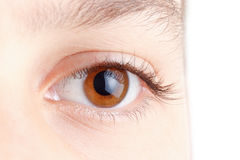 Eye with beautiful long lashes, brown, macro. Royalty Free Stock Photography