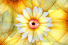 Eye Of Beauty. Beauty Is In The Eye Of The Flower Holder Royalty Free Stock Image
