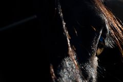 Eye of the Beholder- Abstract Horse Eye Silhouetted At Sunset royalty free stock images