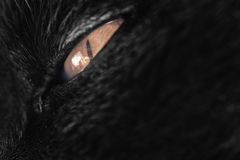 Eye of a big male cat Royalty Free Stock Photography