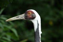Eye of a bird. A photo of a bird stock photography