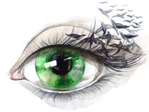 Eye with birds. Beautiful green human eye with birds Royalty Free Stock Image