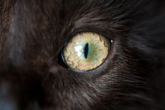 Eye of black cat. Macro Royalty Free Stock Image