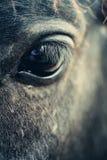 Eye of black close up Stock Photo