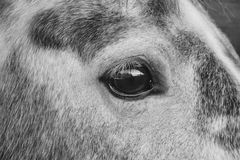 Eye, Black And White, Face, Nose Stock Photo