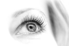 Eye in blak and white. Woman eye in black and white colors stock images