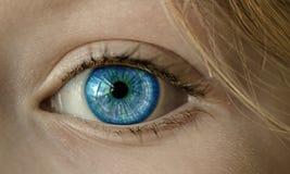 Eye, Blue Eye, Iris, Pupil, Face Royalty Free Stock Photo