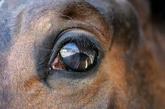 Eye of a brown horse close up Stock Photos