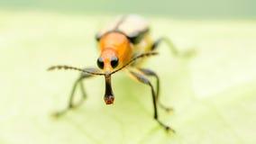 Eye bug Royalty Free Stock Photography