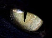 Eye cat. Black cat closeup, eye detail Royalty Free Stock Images