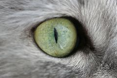 Eye of a cat stock images