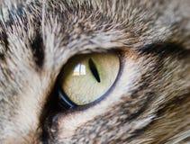 Eye cat detail. Macro detail of a cat Stock Photo