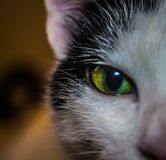 The eye of the cat. In this photo we can see the green eye of a cat stock photos