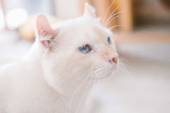Eye of cat. Sweet eye of some cat royalty free stock photography