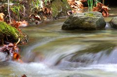 An eye-catching and refreshing forest stream. A beautiful forest stream cascading over mossy rocks in Mountain Paggaio - Greece royalty free stock images