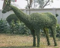 A eye catching green topiary of deer stock photography