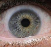 Eye, chiuda in su Immagini Stock