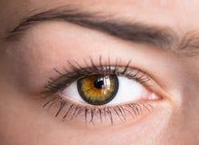 Eye with clock. Stock Image