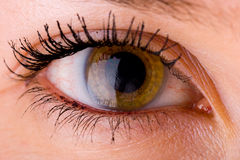 Eye close up 3 royalty free stock images