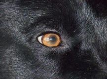 Eye close up Stock Photo