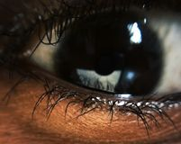 Eye close up brown stock photography