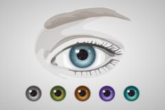 Eye and colored irises. Natural and unnatural colors Royalty Free Stock Image