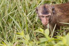 Eye contact of baby monkey Stock Photos