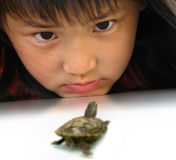 Eye contact between girl and turtle. Little girl interact with a turtle royalty free stock photography