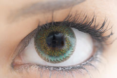 Eye with contact lens. Green eye of a woman wearing contact lenses royalty free stock photography