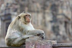 Eye contact from monkeyMonkey waiting something royalty free stock photo