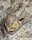 Eye of the crocodile Stock Images