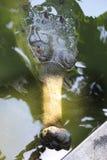 Eye of crocodile. Indian Gavial. Stock Photos