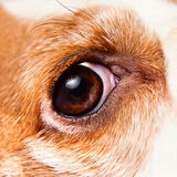 Eye of a dog Stock Images