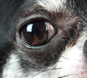 Eye of a dog Royalty Free Stock Photos