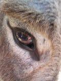 Eye of the Donkey Royalty Free Stock Photos