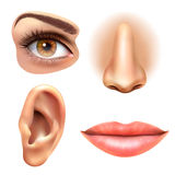 Eye Ear Lips Nose Icons Set. Human face parts 4 sense organs icons square collection of eye nose mouth and ear realistic vector illustration Royalty Free Stock Image