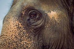 Eye of the elephant Stock Image